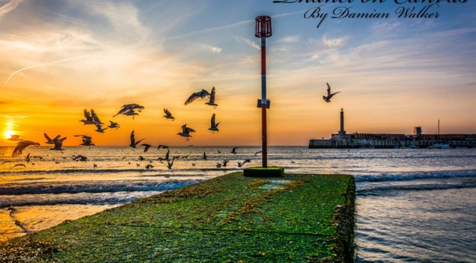 Seagulls by the Harbour 09.07.2015